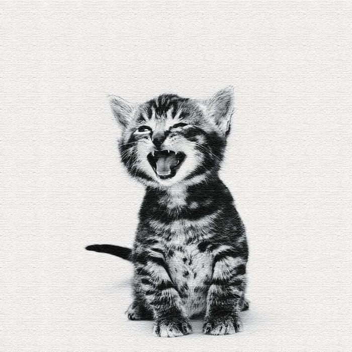 猫 ファブリックパネル アートパネル アートデリ XLサイズ 100cm×100cm lib-5109083s4 北欧 送料無料 クーポン プレゼント 通販 NP 後払い 新生活 オススメ %off ジェンコ 北欧 モダン インテリア ナチュラル テイスト 雑貨