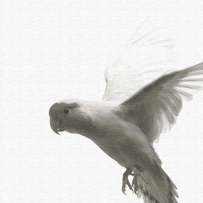 鳥 ファブリックボード pho-0109 アートパネル アートデリ XLサイズ 100cm×100cm lib-5128914s4 北欧 送料無料 クーポン プレゼント 通販 NP 後払い 新生活 オススメ %off ジェンコ 北欧 モダン インテリア ナチュラル テイスト 雑貨