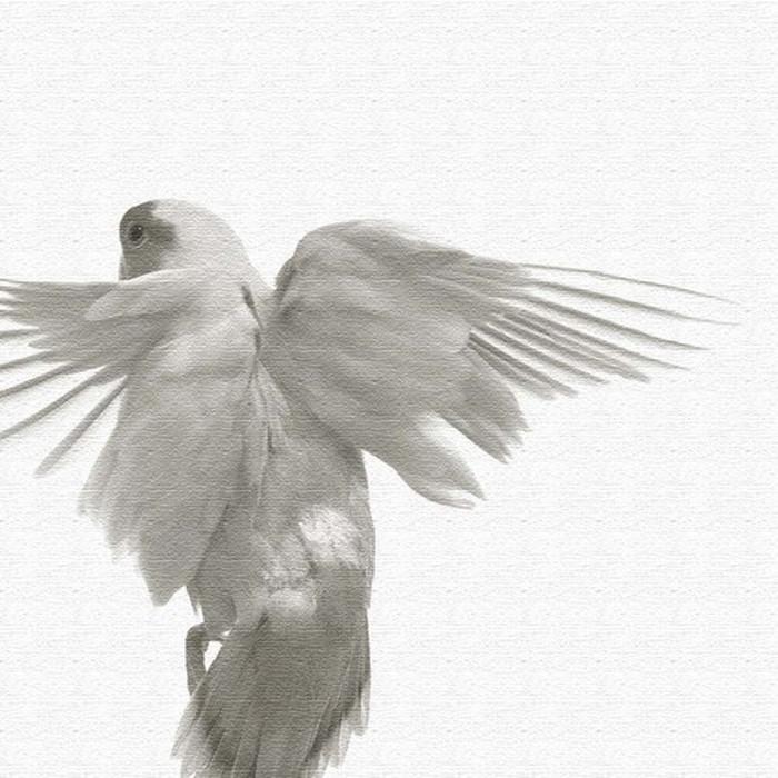 鳥 アートパネル pho-0111 アートデリ XLサイズ 100cm×100cm lib-5128916s4 北欧 送料無料 クーポン プレゼント 通販 NP 後払い 新生活 オススメ %off ジェンコ 北欧 モダン インテリア ナチュラル テイスト 雑貨