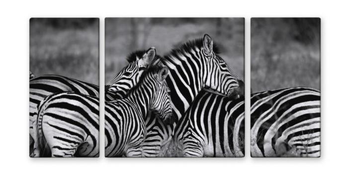 CANVAS ART キャンバスアート zebra-mono シマウマ Lサイズ W1000×H500 3枚組 US-2013 kar-4999363s2 北欧 送料無料 クーポン プレゼント 通販 NP 後払い 新生活 オススメ %off ジェンコ 北欧 モダン インテリア ナチュラル テイスト 雑貨