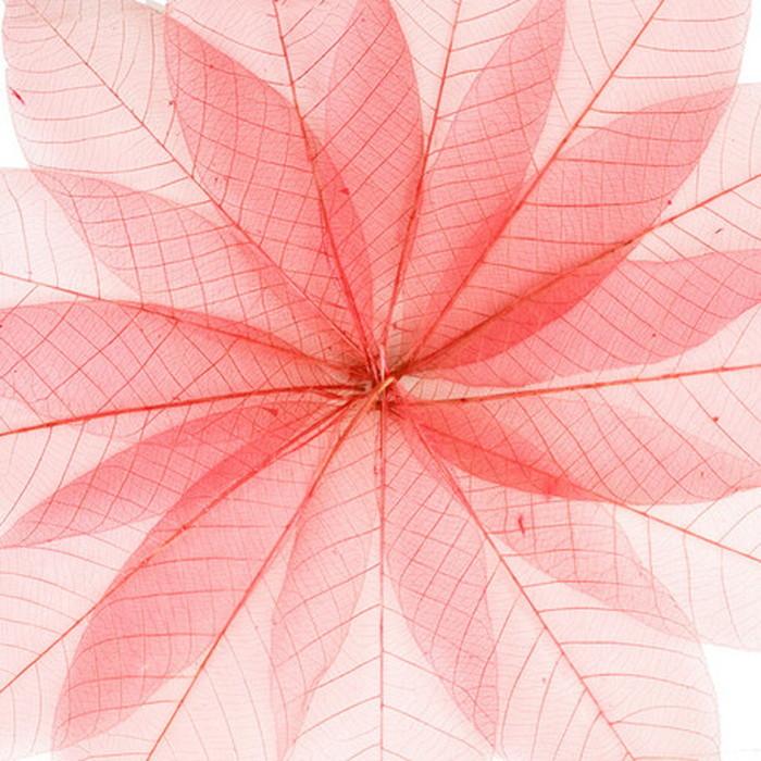 キャンバスパネル Art Panel Transparent red leaves 800x800x40mm IAP-52787 bic-7184396s1送料無料 北欧 モダン 家具 インテリア ナチュラル テイスト 新生活 オススメ おしゃれ 後払い 雑貨