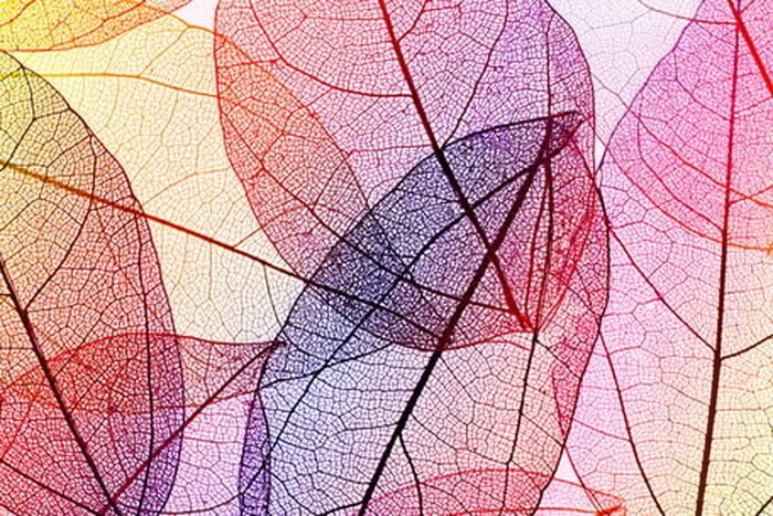 キャンバスパネル Art Panel multicolor decoretive skelrton leaves 800x530x40mm IAP-52789 bic-7184398s1送料無料 北欧 モダン 家具 インテリア ナチュラル テイスト 新生活 オススメ おしゃれ 後払い 雑貨