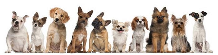 キャンバスパネル Art Panel Dogs 900x300x40mm IAP-52793 bic-7184410s1送料無料 北欧 モダン 家具 インテリア ナチュラル テイスト 新生活 オススメ おしゃれ 後払い 雑貨