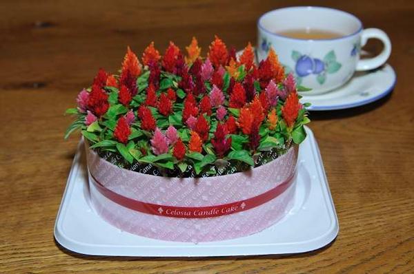 aucgifuryokuen Rakuten Global Market Celosia flower candle cake