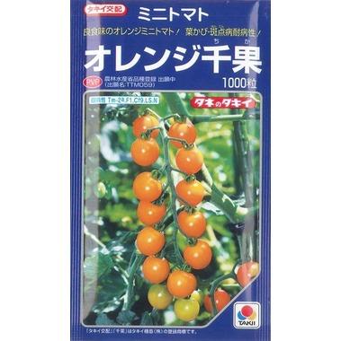 ミニトマトオレンジ千果 1000粒タキイ交配
