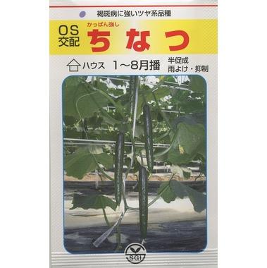 送料無料!きゅうりちなつ 350粒埼玉原種育成会
