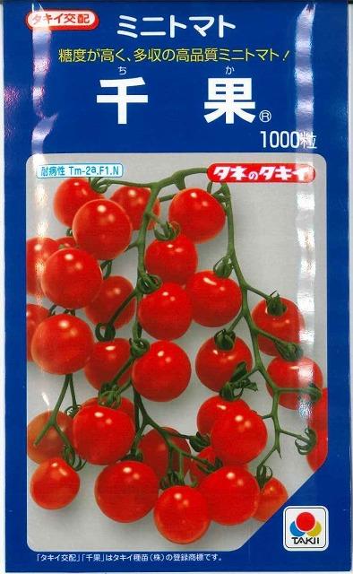 美品 糖度が高く 特売 品質最高のミニトマト ミニトマト千果 1000粒タキイ交配