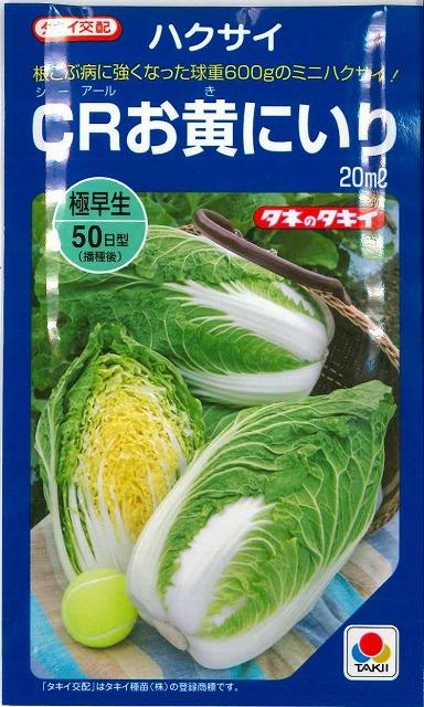 根こぶ病に強くなった食べきりサイズの極早生ミニハクサイ クリアランスsale!期間限定! 白菜CRお黄にいり 5%OFF 20mlタキイ交配