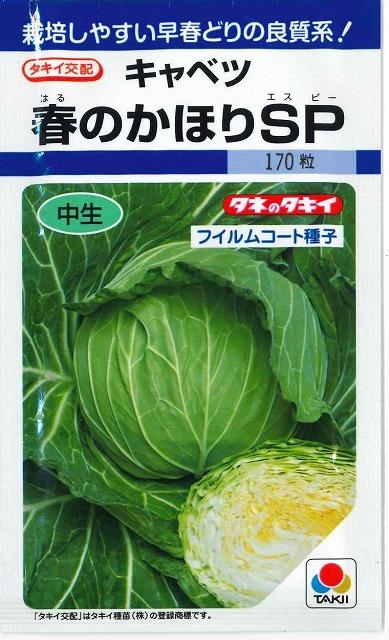 定価 5☆好評 栽培しやすい早春どりの良質系キャベツ キャベツ春のかほりSPペレット5000粒タキイ交配