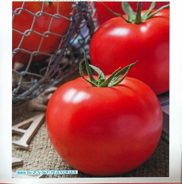 低温伸長性にすぐれ 毎日激安特売で 営業中です トマト黄化葉巻病に耐病性の桃太郎 専門店 トマト桃太郎ホープコート2L1000粒タキイ交配