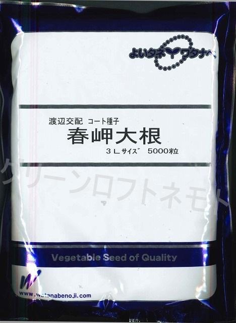 大根春岬 3Lコート5千粒  渡辺交配