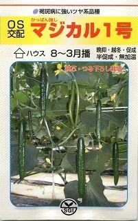 きゅうりマジカル1号350粒埼玉原種育成会
