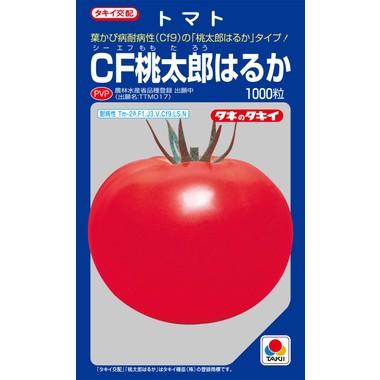 大玉トマトCF桃太郎はるか1000粒 タキイ交配
