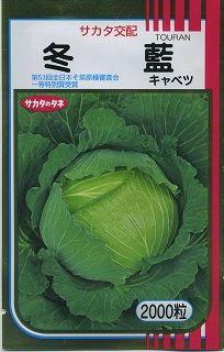 全商品オープニング価格 偏円球で3kg以上の大玉収穫が可能な中晩生品種です 本日の目玉 キャベツ冬藍 2000粒サカタ交配