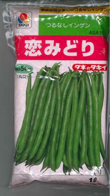 予約 極濃緑莢で多収のつるなしインゲン インゲン恋みどり タキイ交配 爆買いセール 1L