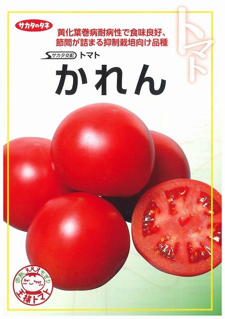大玉トマト かれん1000粒 サカタのタネ