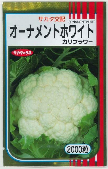 極めて包葉性があり 純白花蕾が収穫できる中早生品種 新作からSALEアイテム等お得な商品 満載 オーナメントホワイト2000粒サカタ交配 メーカー公式ショップ カリフラワー