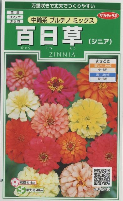 花の種 百日草(ジニア)中輪系プルチノミックス 小袋 サカタのタネ