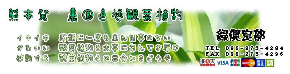緑倶良部:モンステラ・ユッカ等人気の観葉を農園直送でお届けします。