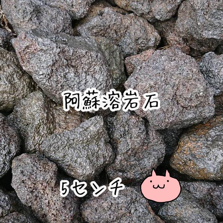 水槽のレイアウトに失敗なしの素材 例:10キロご注文の場合 1 000とご入力ください 20キロまで送料1000円 23キロ以上お買い上げの場合は送料無料 溶岩石 阿蘇山溶岩石 5センチサイズ 好評受付中 10グラム6円 アクアリウム オブジェ インテリア オープニング 大放出セール テラリウム エアプランツ ナチュラルストーン ナチュラルウッド 雑貨 アロワナ メダカ 駐車場 苔 玄関 苔リウム 熱帯魚 リゾート 金魚
