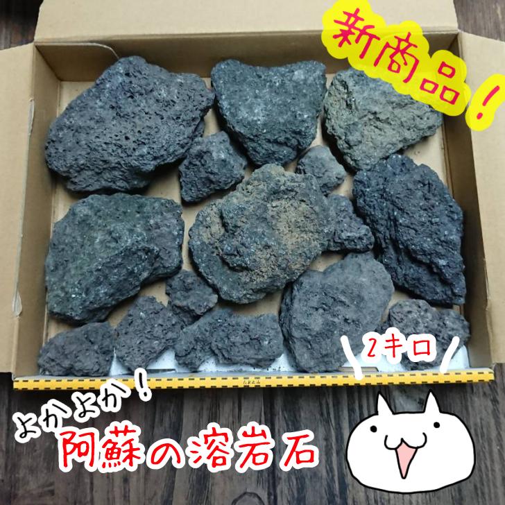 水槽 アクアリウム テラリウム ※アウトレット品 高級品 お庭に定番の素材 阿蘇の溶岩石 3~10cm 2kg よかよか