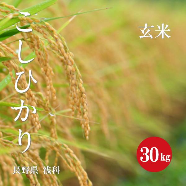 長野県 浅科産 こしひかり 特A1等米 令和1年産 玄米 30kg 【送料無料】