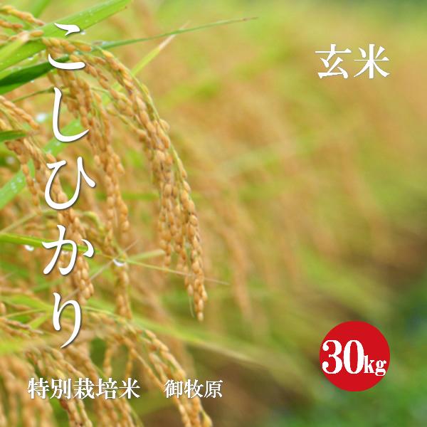 特別栽培米 こしひかり 御牧原産 特A1等米 令和1年産 玄米 30kg 【送料無料】