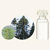 日本アロマ環境協会 表示基準適合認定精油 【GET! 生活の木 エッセンシャルオイル モミ 3mL】 エッセンシャルオイル アロマオイル 精油 アロマ