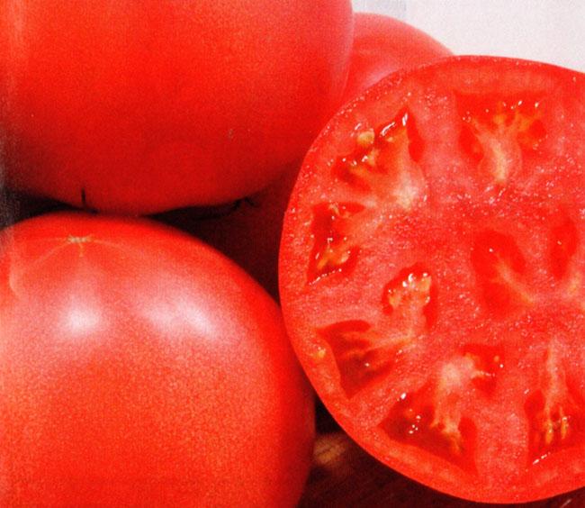 野菜種 トマト 豊作祈願1103 1000粒 【宅配便発送/ゆうパケット不可】【取り寄せ】
