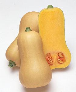 完売 (人気激安) 種 野菜 南瓜 ひょうたん形かぼちゃ 種子大袋 カボチャ 野菜種 100粒 バターナッツ