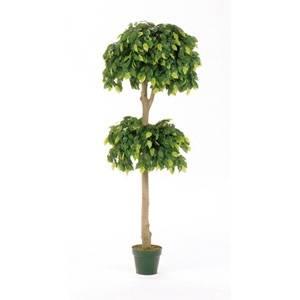 フィカスツリー