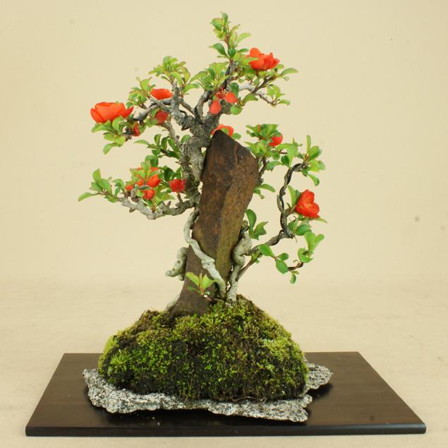 【送料無料】 長寿梅 赤花 石付 小品サイズ 【雑木盆栽】いよじ園