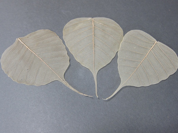 Set / happy good luck pass for outstanding and Linden are 10 good luck sacred fig leaf (leaf)