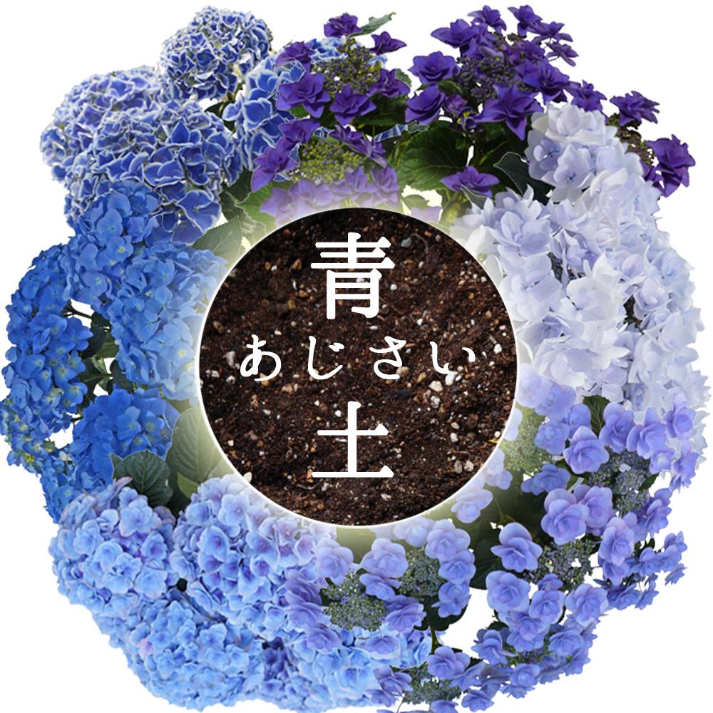 日本を代表するあじさい育種の大家【さかもと園芸】さんの青色あじさいの土です。 植え替え応援!青培養土 青色あじさいの土 【あじさい育種のオーソリティー】 さかもと園芸の 達人のあじさい 青色あじさいの土 5リットル 培養土
