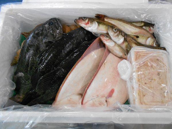 〔送料無料〕特選北海道産鮮魚セット〔E〕北港直販〔同梱不可〕〔着日指定不可〕貝