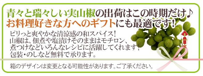 """""""実さんしょ""""(生山椒) 約1kg 山椒【予約 5月中旬以降】"""
