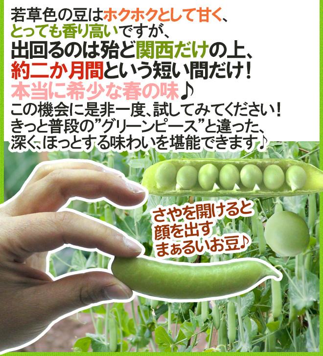 """紀州・和歌山 """"うすいえんどう"""" 秀品 約1kg バラ詰め【予約 3月中下旬以降】"""