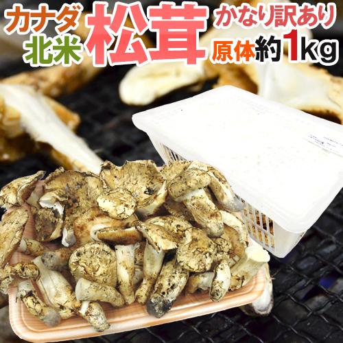 """【送料無料】カナダ・北米産 """"松茸"""" かなり訳あり 約1kg 原体 大きさおまかせ【予約 10月以降】"""