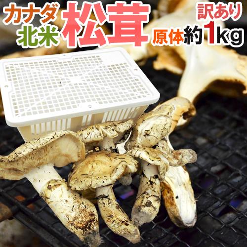 """【送料無料】カナダ・北米産 """"松茸"""" 訳あり 約1kg 原体 大きさおまかせ【予約 10月以降】"""