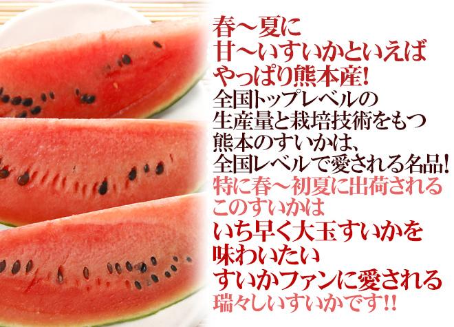 """熊本県産 """"熊本すいか"""" 秀・優品 2L~3Lサイズ 約7kg~9kg【予約 4月以降】"""