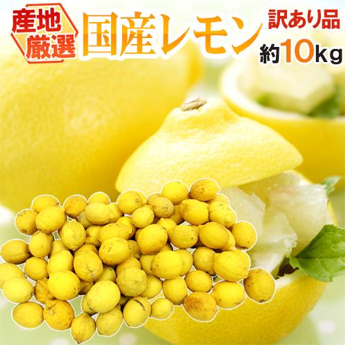"""【送料無料】""""完熟国産レモン"""" 訳あり 約10kg 大きさおまかせ 産地厳選【予約 8月以降】"""