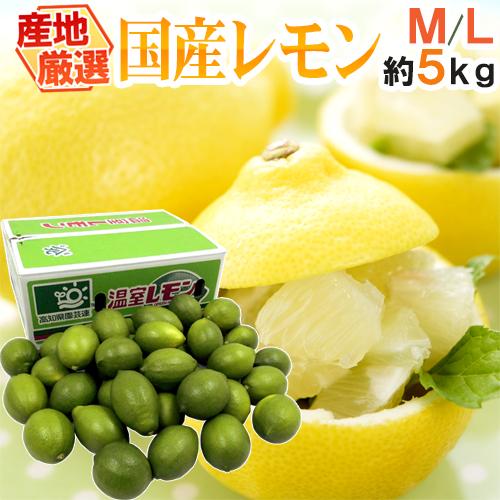 """【送料無料】""""国産レモン"""" 約5kg 30~40玉前後 M~L 産地厳選【予約 7月以降】"""