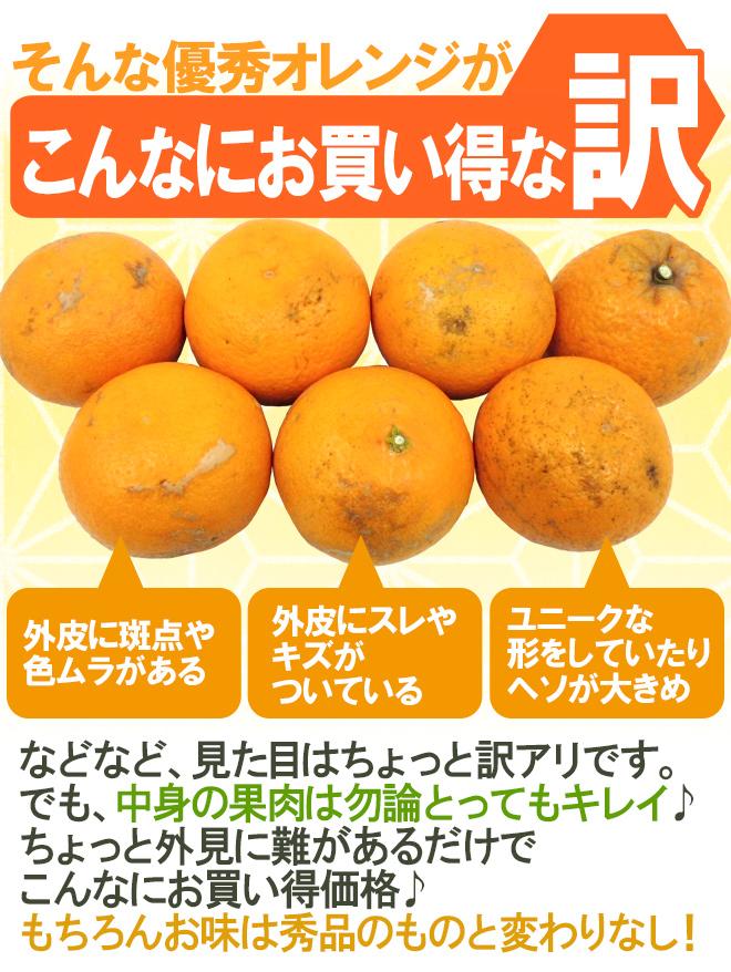 """和歌山産 """"清見オレンジ"""" 訳あり 約10kg 大きさおまかせ【予約 3月以降】"""