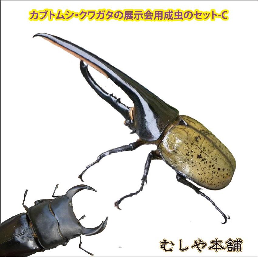 カブトムシ・クワガタの展示会用成虫のセット-C(超大型10種類)【大口・大量購入】