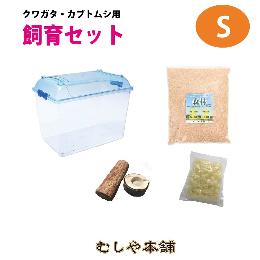 カブトムシ・クワガタ成虫小型用飼育セット