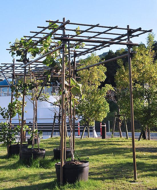 【送料無料】果樹棚セット 積水樹脂 フルーツパーゴラ Lタイプ