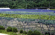 森下 強力防鳥網30mm目 200坪用 巾18mX長さ36m(青)