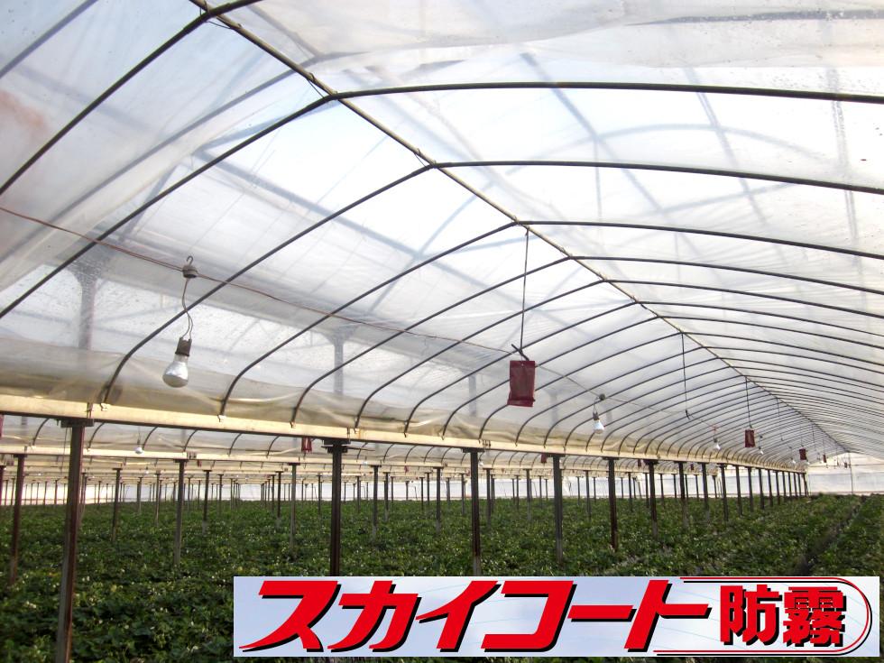 POフィルム 農業用ポリオレフィンフィルム 農PO メーター単位切売り スカイコート防霧 幅370cm×厚み0.05mm