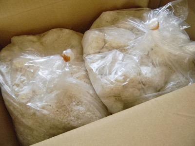 味噌 塩麹 甘酒作りに適した大変お得な業務用 生糀10.2kg入り 往復送料無料 生麹 至上 米麹 5kg×2個
