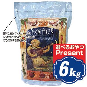 ロータス アダルト チキンレシピ 中粒 6kg Lotus ドッグフード 【正規品】